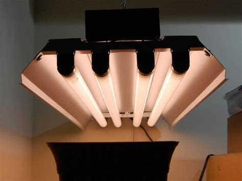 fluorescent grow lights what size of led grow light is needed for indoor