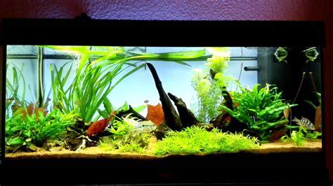 aquarium einrichten beispiele der richtige fischbesatz f 252 r ein aquarium haustier