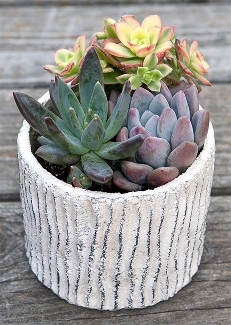how to care for succulents in pots how to care for potted succulents giving plants blog