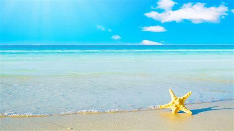 hd hintergrundbilder starfish sommer sand meer ufer