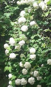 Kleiner Baum Garten : kleiner baum gro er busch was bist denn du seite ~ Lizthompson.info Haus und Dekorationen