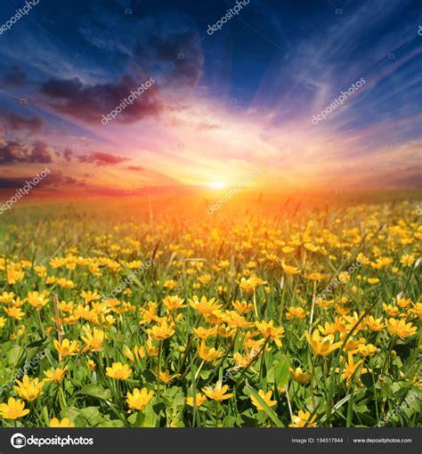 immagini prato fiorito tramonto sopra il prato fiorito foto stock 169 pklimenko