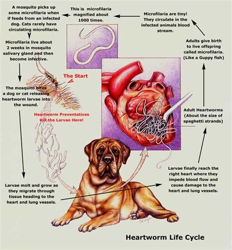 Immiticide Heartworm Treatment  Veterinarians Harahan. Track Signs. Sepsis Infographic Signs. December 9th Signs Of Stroke. Deficient Signs. Hercules Character Signs. School Canteen Signs Of Stroke. Host Signs Of Stroke. Gmail Signs Of Stroke
