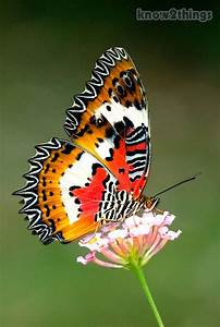 Top 10 Most Beautiful Butterflies | Everything You Know