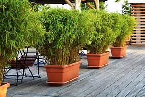 balkonsichtschutz aus bambus als pflanze oder bambusmatte With französischer balkon mit winterharte büsche für den garten