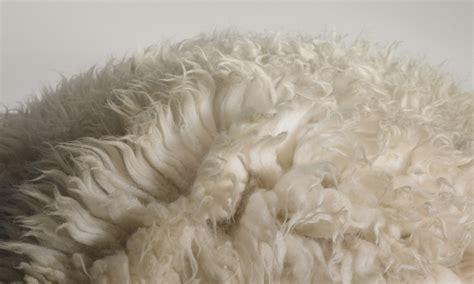 wool rug cleaner simple wool rug cleaning emilie carpet rugsemilie