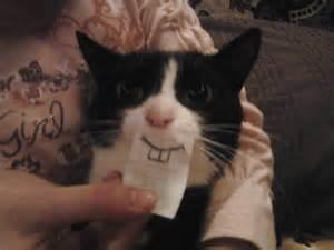 happy cat humor my bipolar