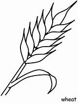 Wheat Coloring Pages Flowers Printable Coloringpagebook Communion Colouring Pattern Banner Sheets Crops Advertisement Canadian sketch template