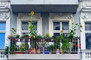 Balkon Bäume Im Topf : sonnenblume auf dem balkon halten so klappt 39 s ~ Frokenaadalensverden.com Haus und Dekorationen