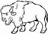 Buffalo Coloring Pages Animals Bison Wildlife Printable Clip Animal Clipart Native Oklahoma Bear sketch template