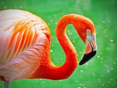 cat boreon jigsaw puzzle flamingo jigsaw puzzles daily