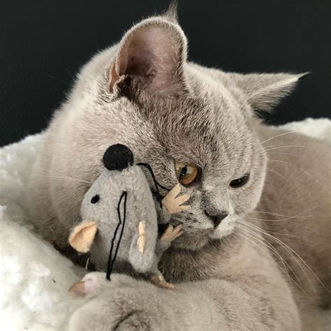 better dogs cats than why pets reasons cat mouse ragnar