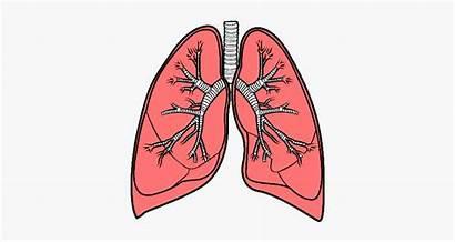 Pulmones Dibujo Lungs Clipartkey