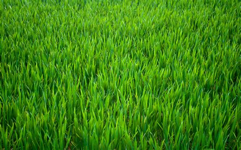 Grass Background Hd 11 » Background Check All