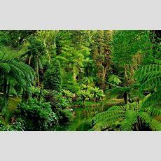 Jungle Wallpapers Free Download Pixelstalknet