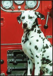 Fire Department Pump Chart 35 Best Fire House Dogs Images On Pinterest House Dog