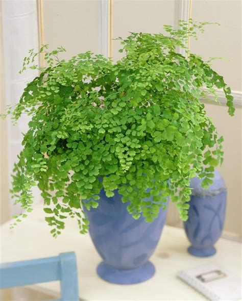 Plants For Bathroom India by Las 17 Mejores Plantas De Interior