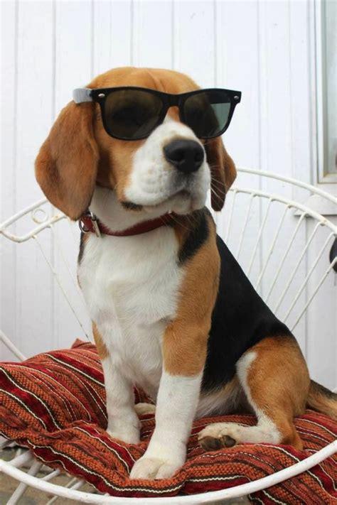 top   popular dog breeds  usa top inspired
