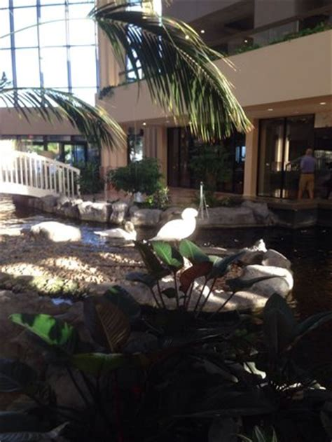 embassy suites palm gardens beethoven and bach the swans picture of embassy