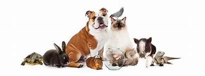 Domestic Pets Together Pet Communities