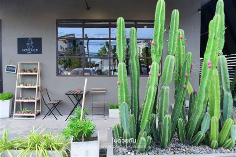 Cactus & Cup Café คาเฟ่กระบองเพชร ในย่านลาซาล - ไปด้วยกัน ...