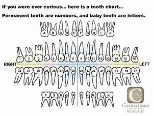 Here Is A Tooth Chart  Or A Tooth Map  That Shows The