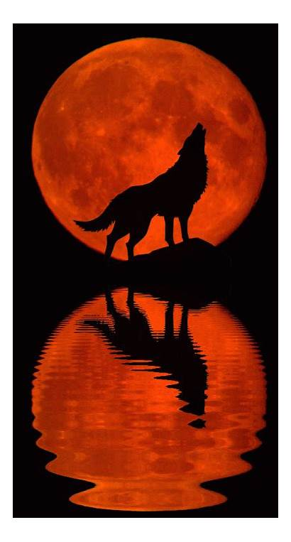 Wolf Howl Pwd Howling Ps