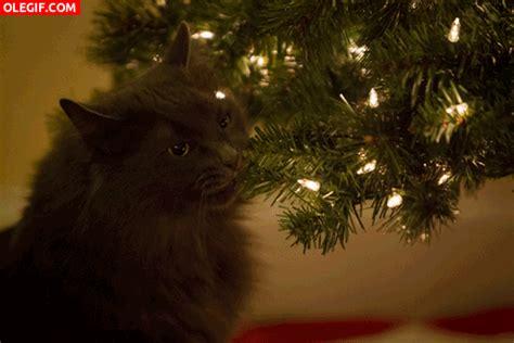 gif este gato se come el 225 rbol de navidad gif 4118
