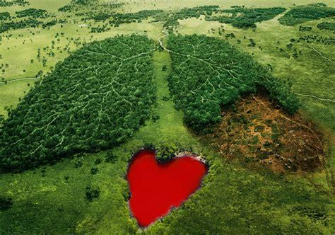 urgent stop bulldozing  amazon rainforest  brazil