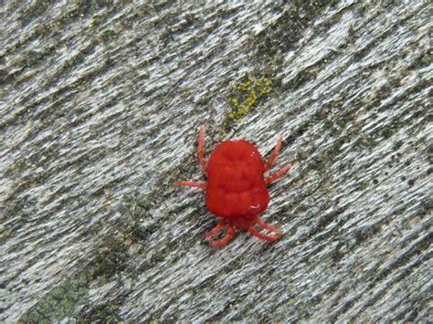 Kleine Rote Ameisen Im Garten 4271 by Und Insekten Im Garten