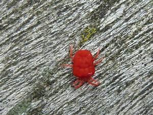 Winzige Rote Tierchen : kraut und rosen insekten im garten ~ Lizthompson.info Haus und Dekorationen