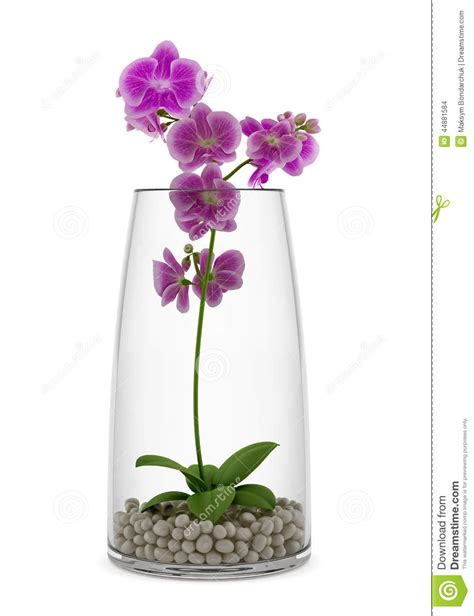 orchidea vaso fiore porpora dell orchidea in vaso di vetro isolato su