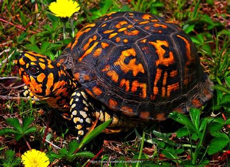 what color is a turtle best 10 turtles ideas on turtle sea turtles