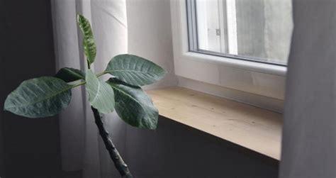 Schicke Holzfensterbretter Für 30 Euro Selbst Gemacht