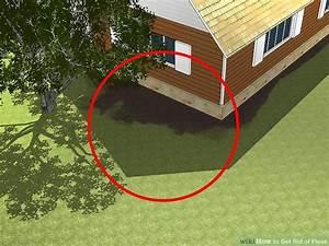Puce De Jardin : 3 ways to get rid of fleas wikihow ~ Nature-et-papiers.com Idées de Décoration