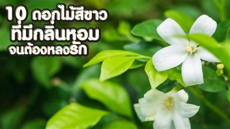 10 ดอกไม้สีขาว ที่มีกลิ่นหอมจนต้องหลงรัก มีดอกอะไรบ้าง มา ...
