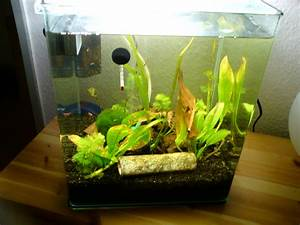 Tiere Für Aquarium : 30 lieter nano aquarium komplet aquarien ~ Lizthompson.info Haus und Dekorationen