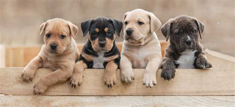 The Puppy Barn Utah. Petition American Fork City Officials