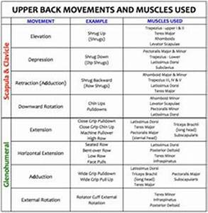 1000 Images About Nasm On Pinterest Muscle Anatomy And
