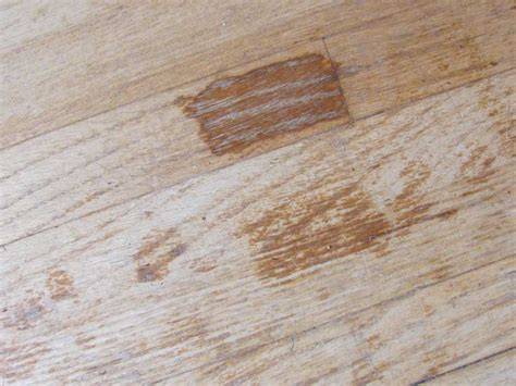 Do Pets Ruin Your Hardwood Floors?  Mn Pets And Wood Floors