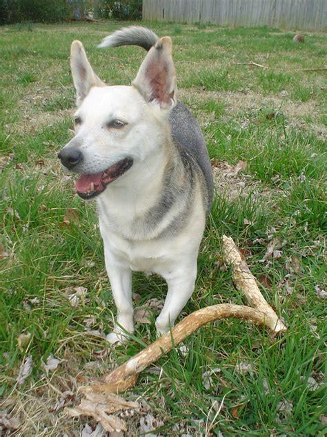 Nashville Pet Owners Test Your  Ee  Dog Ee  S Dna Mom Blog