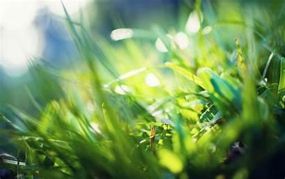 Retina Wallpapers Macbook Mac Grass 1800 2880