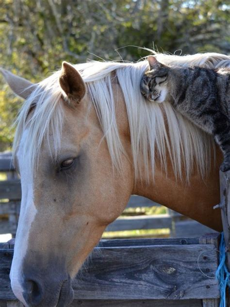 cat  horse wallpaper background hd wallpaper background