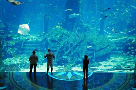 dubai hotel aquarium atlantis travelling to dubai