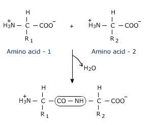 amino acids another biochem blog