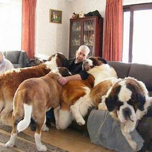 hahand i thought german shepherds were the With st bernard dog house