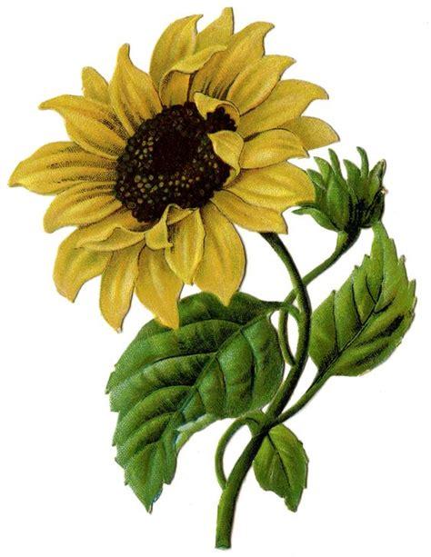 beautiful bright yellow wildflowers clipart clipground