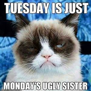 Funny Tuesday Quotes. QuotesGram