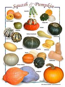 Types Of Pumpkins Australia by 43 Best Images About Vegetables And Fruit List Names On