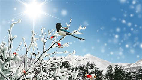Image result for images of sunny winter day
